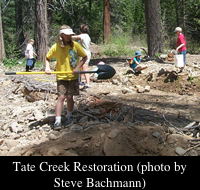 Tate Creek Restoration project