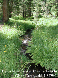 Upper Sheepheaven Creek (photo by Glenn Greenwald, USFWS)