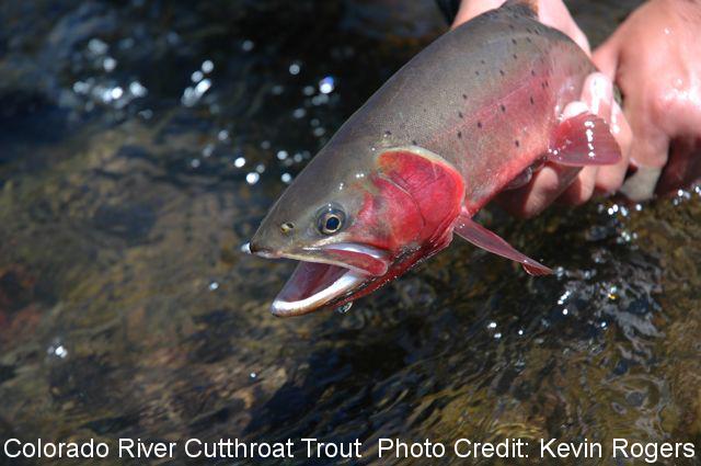 Colorado River CT Photo Credit: Kevin Rogers